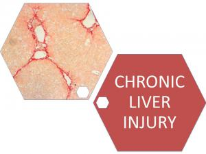 Chronic Liver Injury